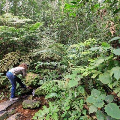 יער בווינדי, אוגנדה - צילום: יואל שליין