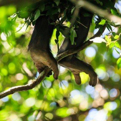 שימפנזים, אוגנדה - Wild Travel, צילום: יואל שליין