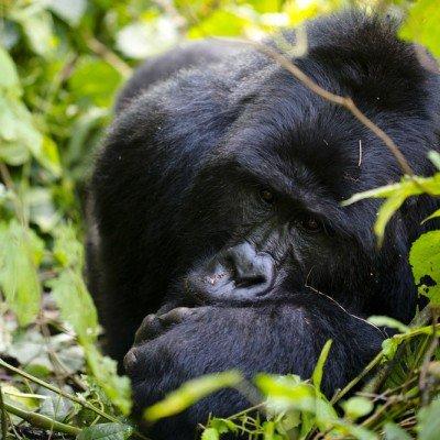אוגנדה - Wild Travel, צילום: ינאי בונה