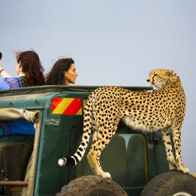 Wild Travel - קניה, צילום: ינאי בונה