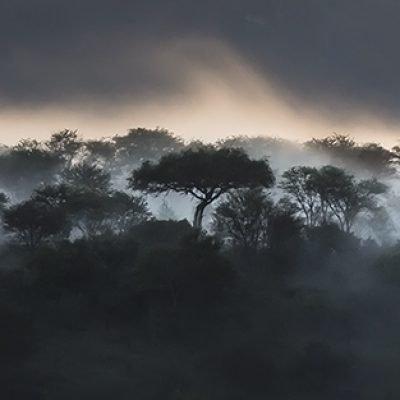 טנזניה - Wild Travel