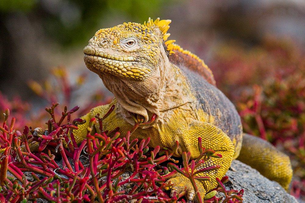 קמצ'טקה - Wild Travel, צילום: ינאי בונה