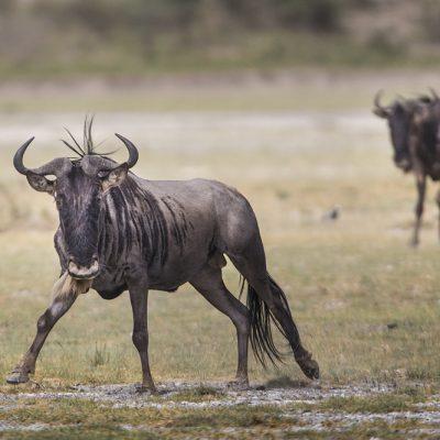 ספארי טנזניה - Wild Travel