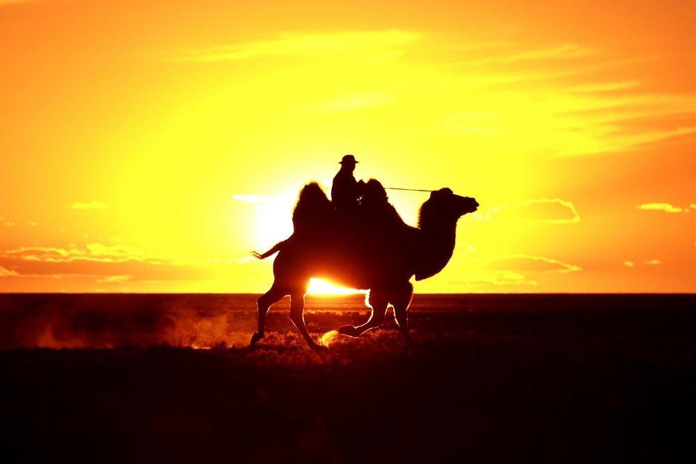 טיול למונגוליה - Wild Travel