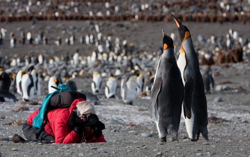 אנטארקטיקה ואיי דרום ג'ורג'יה - Wild Travel