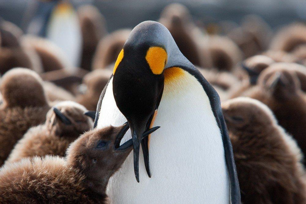 מסע לאנטארקטיקה - Wild Travel