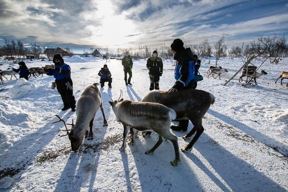 איילי צפון בלפלנד - Wild Travel