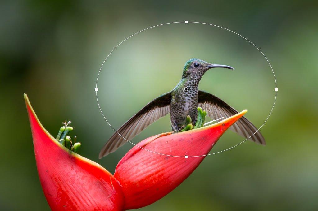 עריכת תמונות ב Lightroon - פילטר רדיאלי | Wild Travel