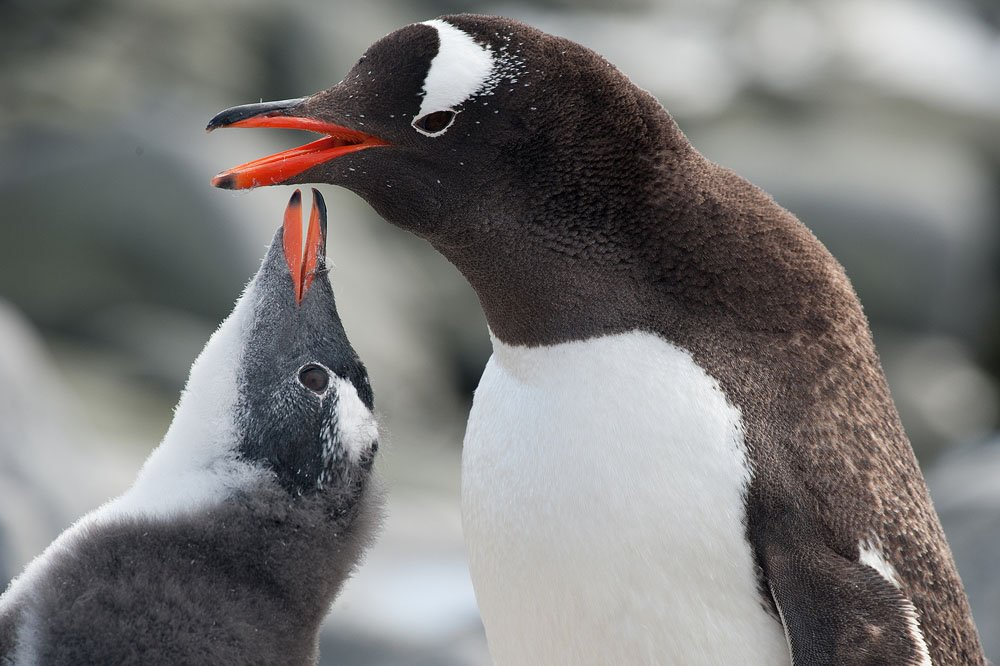 אנטארטיקה - Wild Travel | photo by Ocean Wide expeditions