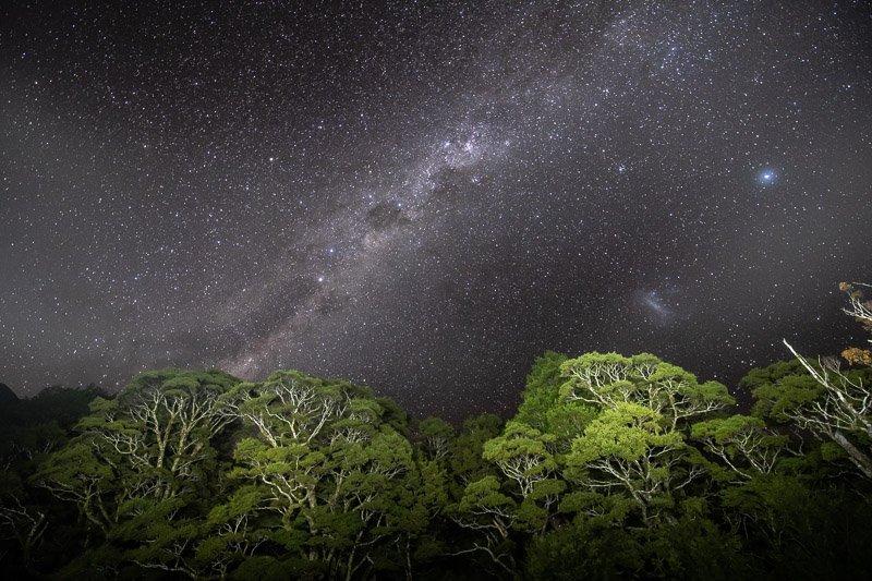 Wild Travel - שביל החלב מעל חופת היער באזור פיורדלנד, ניו זילנד