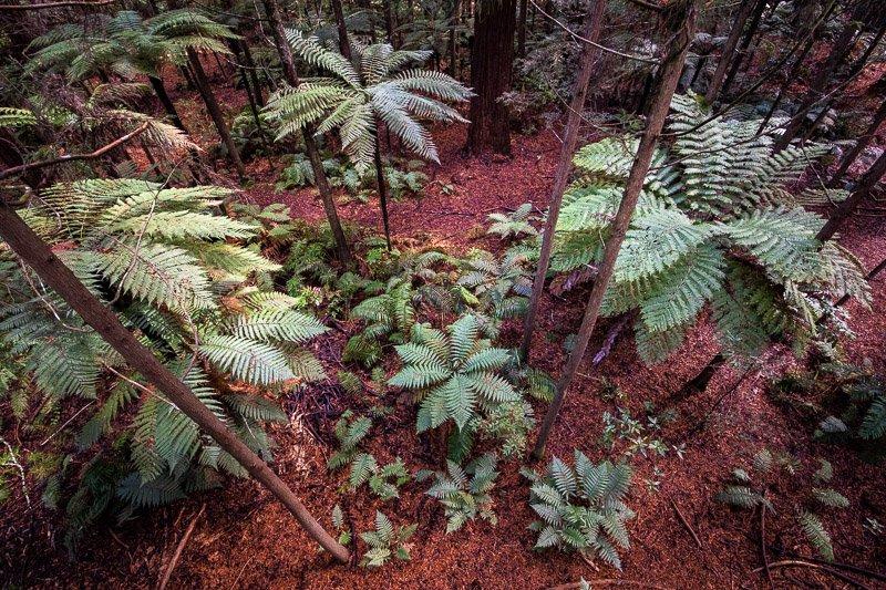 Wild Travel - יערות השרכים ברוטורואה, ניו זילנד