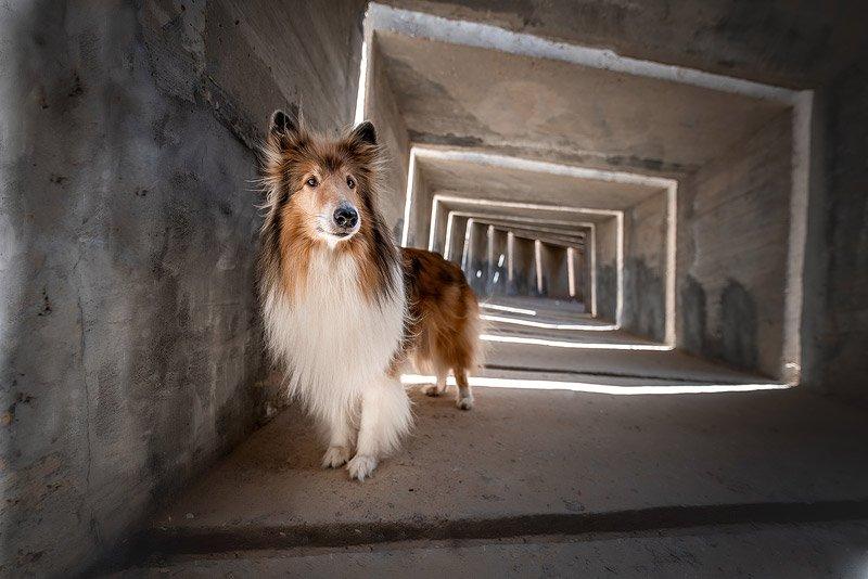 צילום כלבים בסביבה אורבנית מתוך מסדנת צילום כלבים עם מאיר גור - Wild Travel