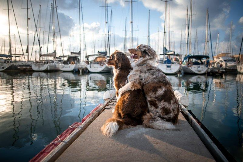 תמונה מסדנת צילום כלבים עם מאיר גור - Wild Travel