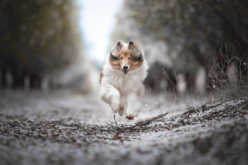 צילום כלבים בטבע בתנועה מתוך מסדנת צילום כלבים עם מאיר גור - Wild Travel