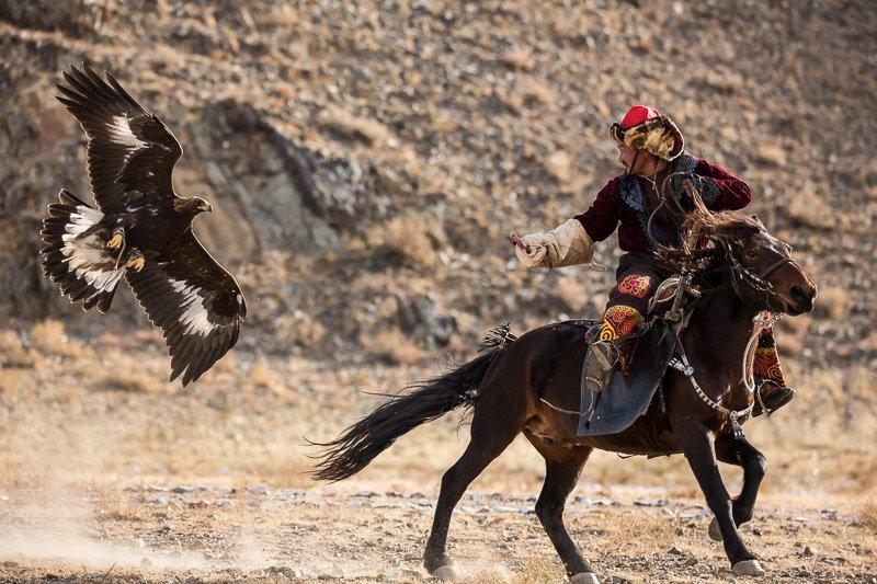 צייד קזחי והעיט שלו רכוב על סוס במהלך פסטיבל העיט הזהוב באולגי, מונגוליה - Wild Travel