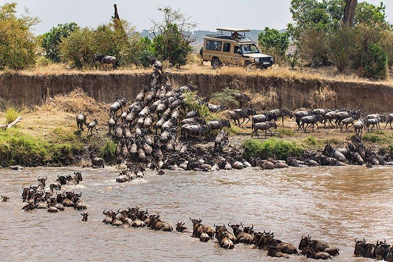 חציית נהר המארה בצפון הסרנגטי, טנזניה - Wild Travel