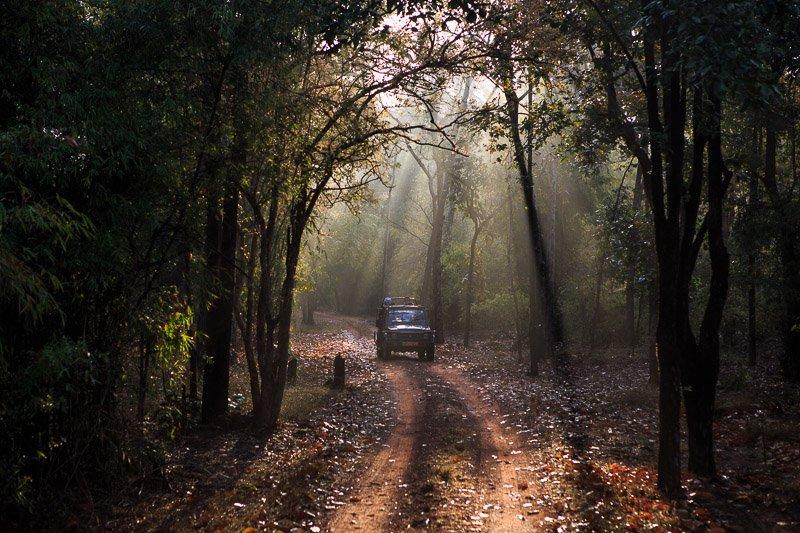 מחפשים טיגריסים בזריחה ביער בנדהבגר, הודו - Wild Travel