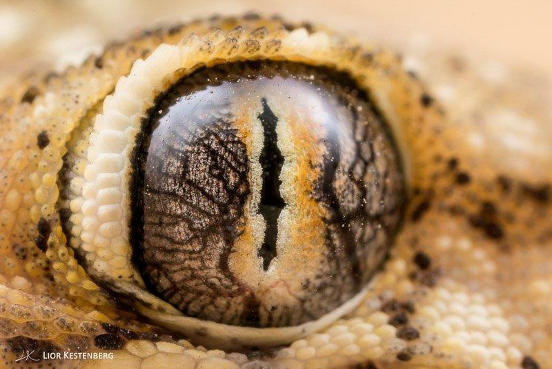עין של ישומונית, קורס צילום מאקרו - Wild Travel