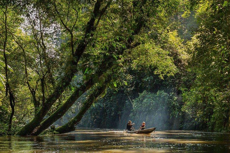 יער האמזונס, שמורת קויאבנו, אקוודור - Wild Travel