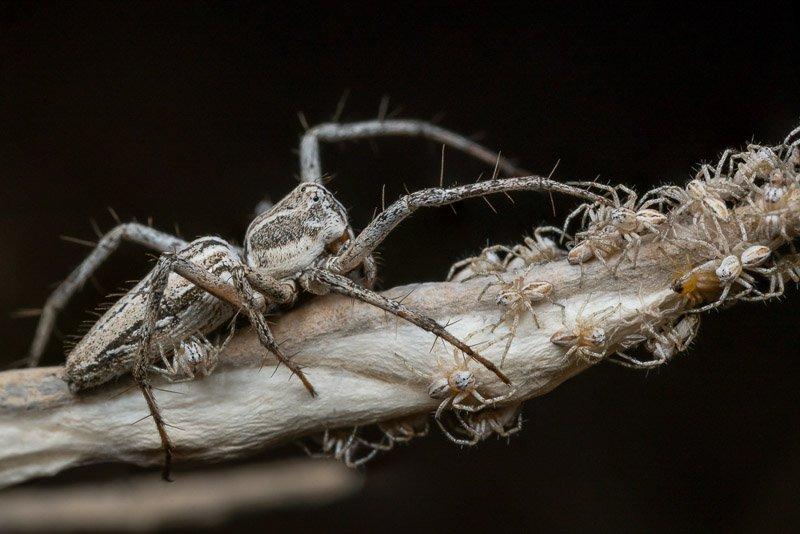 עכבישה עם אבקועים, קורס צילום מאקרו - Wild Travel