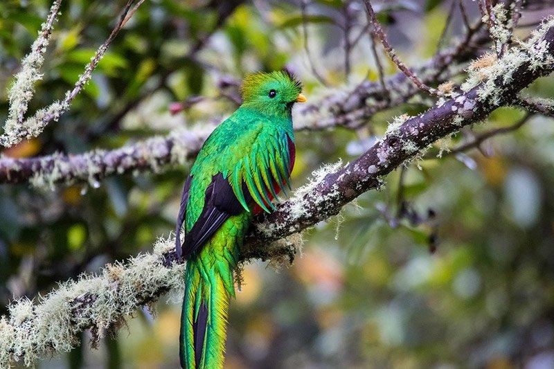 ציפור קצאל ביער גשם, מתוך טיול צילום טבע לקוסטה ריקה - Wild Travel
