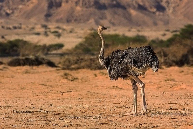 יען בחי בר יטבתה, מתוך סדנת צילום בתמנע וחי בר יטבתה - Wild Travel