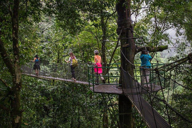 סיור ביער גשם על גשרים תלויים בקוסטה ריקה - Wild Travel
