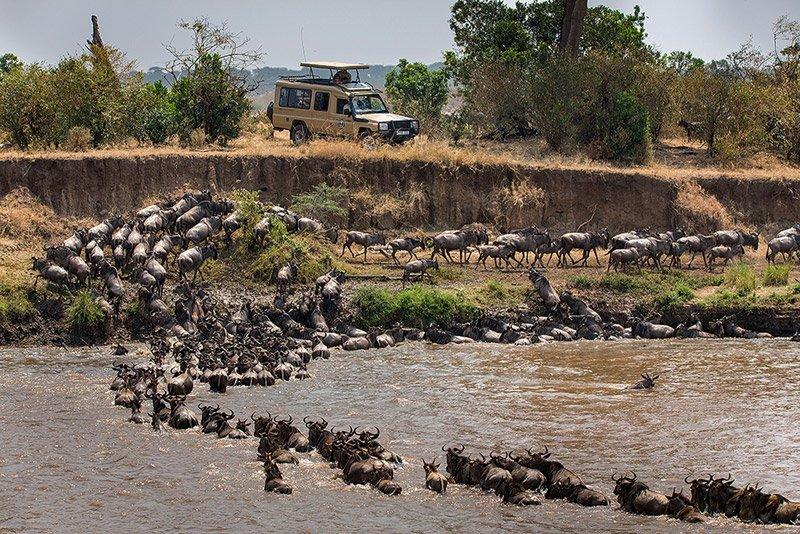 חציית נהר המארה של הנדידה הגדולה, צולם במהלך טיול ספארי בטנזניה - Wild Travel