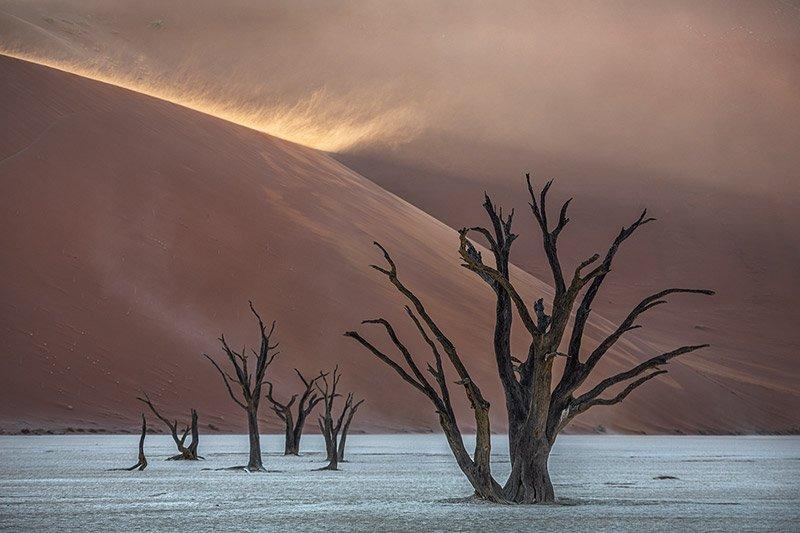 העצים המתים של שמורת DeadVlei בזמן הזריחה, במדבר נמיב, צולם במהלך טיול בנמיביה - Wild Travel