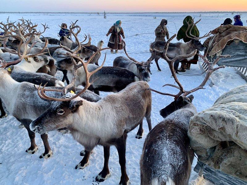 איילי הצפון והנוודים משבט ננץ, סיביר - Wild Travel