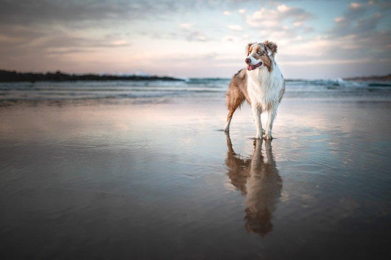 צילום כלבים בשקיעה בחוף הים - Wild Travel
