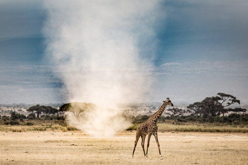 ג'ירפה ומיני טורנדו בשמורת אמבוסלי, קניה - Wild Travel