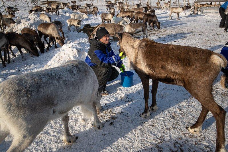 ביקור בחוות איילים אמיתית בצפון לפלנד - Wild Travel