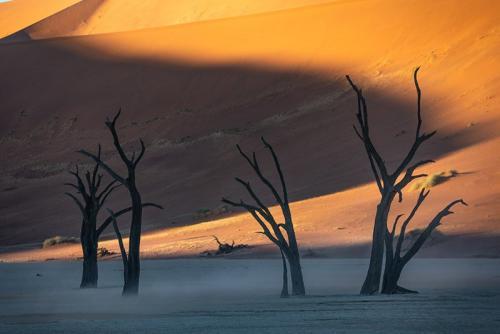 העצים המתים בדדוולי, סוסוסוולי נמיביה - Wild Travel
