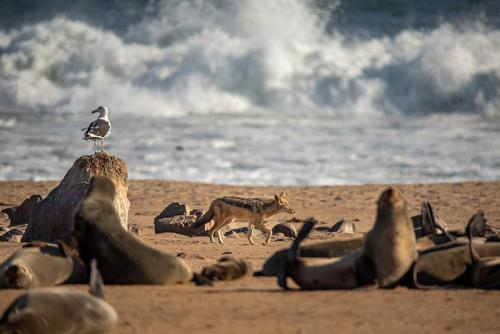אריות ים בקייפ קרוס, נמיביה - Wild Travel