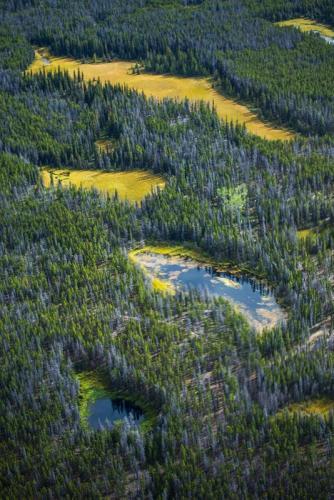 אזורי ביצות ברכס הרי החוף של קולומביה הבריטית, קנדה - Wild Travel