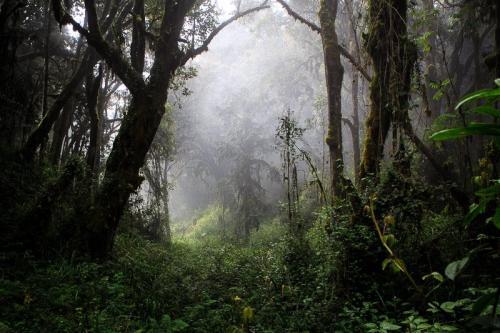 יער הגשם ליד שער מואקה, דרך מצ'אמה - קילימנג'רו, טנזניה - Wild Travel