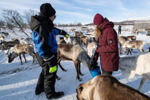 ביקור אצל רועי איילי צפון בגבול פינלנד ונורבגיה בצפון לפלנד - Wild Travel