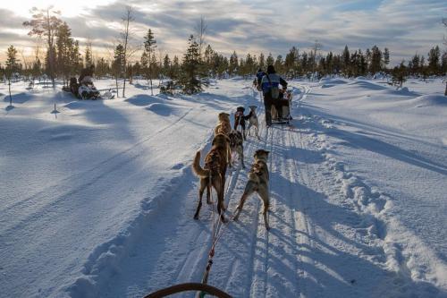 מזחלות כלבי האסקי בלפלנד - Wild Travel
