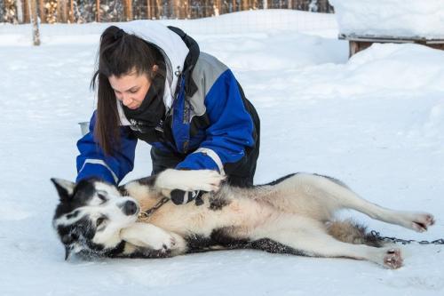 המטיילים משחקים עם כלבי האסקי, לפלנד - Wild Travel