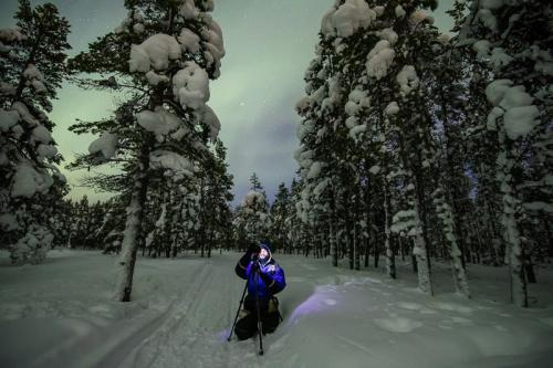 זוהר צפוני ביערות המושלגים של צפון לפלנד - Wild Travel