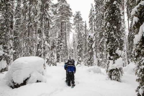 הליכה עם נעלי שלג מיוחדות בלב היער המושלג בלפלנד - Wild Travel