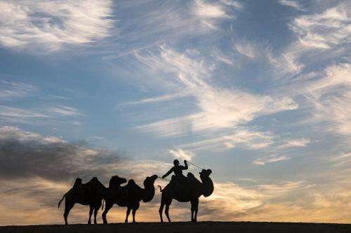 נווד עם שיירת גמלים בשקיעה, מונגוליה - Wild Travel