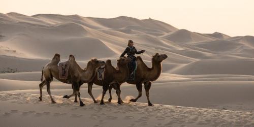 מובילת שיירות גמלים במדבר הגובי, מונגוליה - Wild Travel
