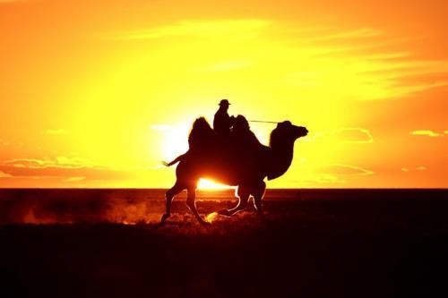 נווד על גמל דו דבשתי בשקיעה, מונגוליה - Wild Travel