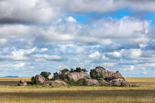 מסאי קופי, מזרח הסרנגטי, טנזניה - Wild Travel