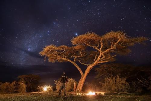 עצי שיטה בלילה מלא כוכבים בסרנגטי, טנזניה - Wild Travel