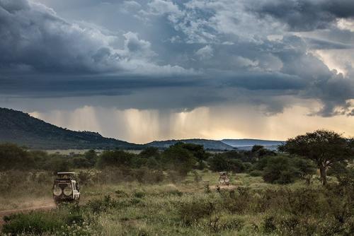 ג'יפים בסוואנה האפריקאית, טנזניה - Wild Travel
