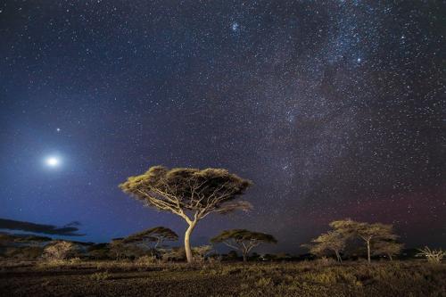 עצי שיטה עם שביל החלב בסוואנה, סרנגטי, טנזניה - Wild Travel