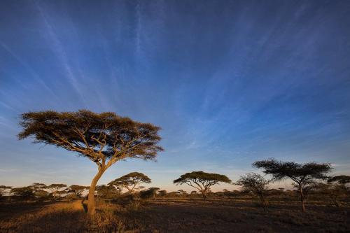 עצי שיטה בסוואנה, סרנגטי, טנזניה - Wild Travel